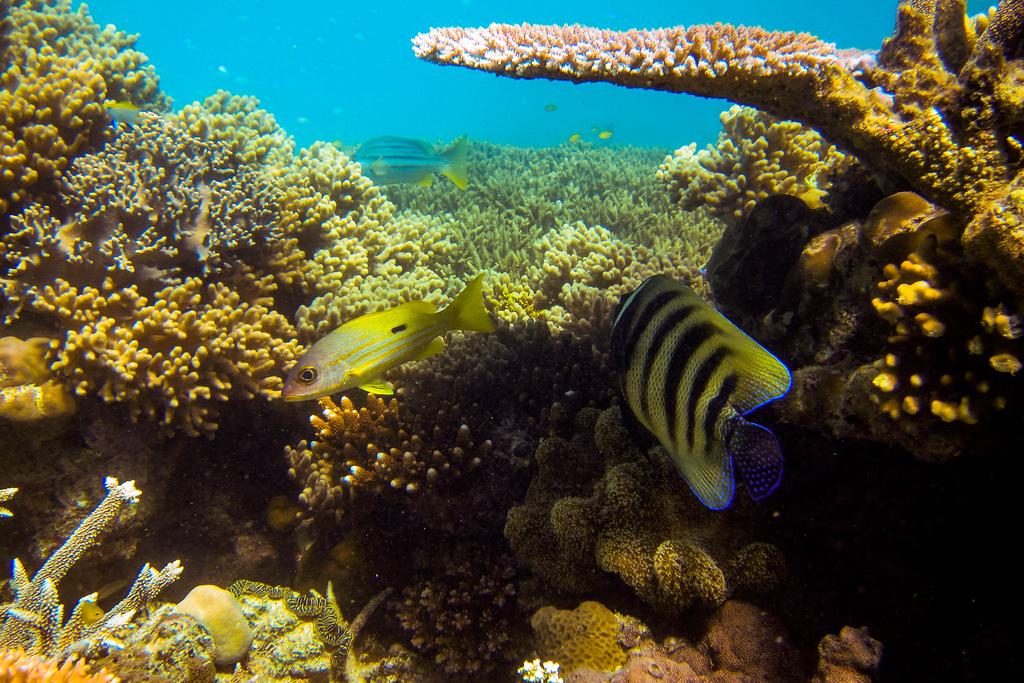 25 lugares para viajar gran barrera de coral