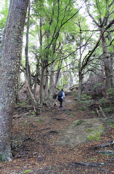 parque nacional excursion ushuaia que hacer en ushuaia